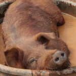 Бережливая ферма: ситуацию изменяют счастливые сотрудники и счастливые животные